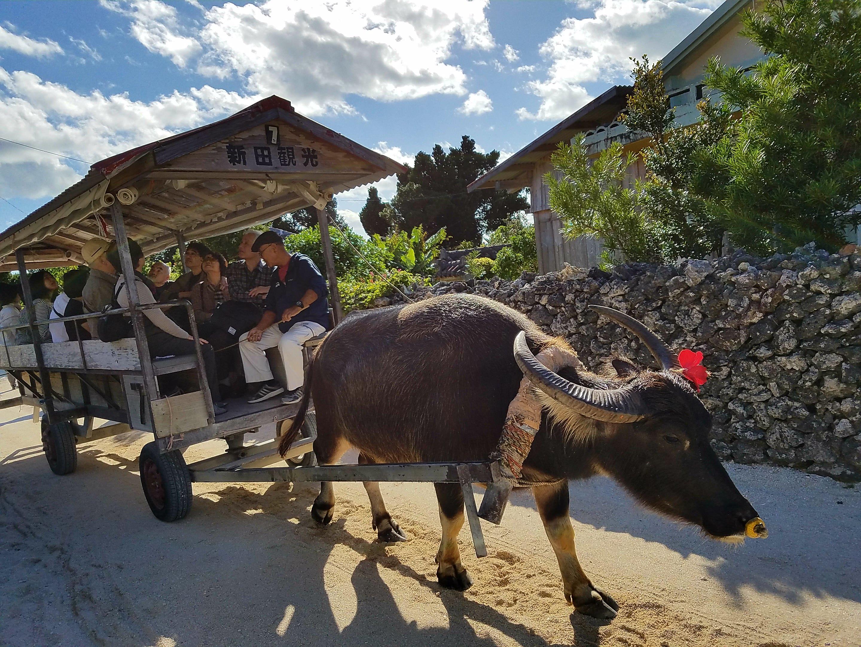 竹富島のおすすめ観光スポット~その1 水牛車観光~